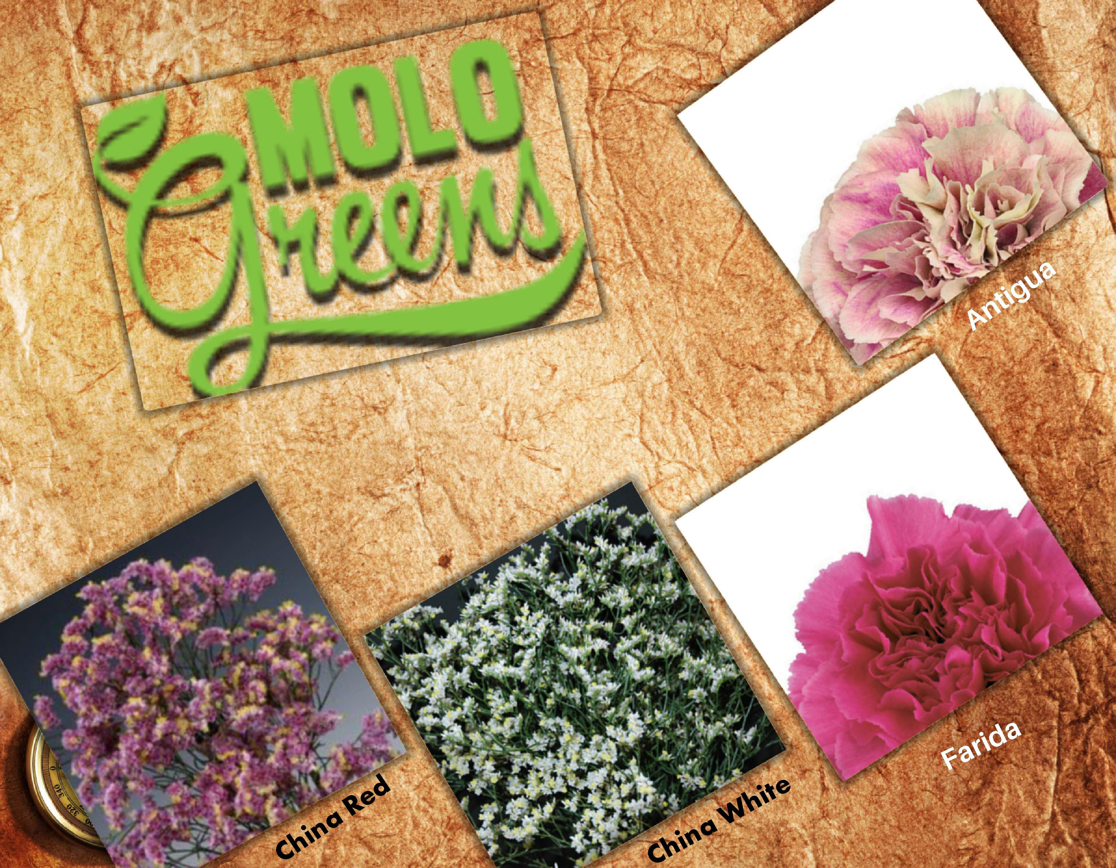 5004cb7bb39 Flowers From Molo Greens   Horticultural News