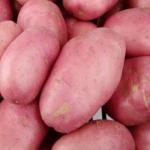 Desiree potato variety