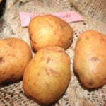 Roslin Tana potato variety