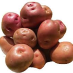 new potato varieties in kenya