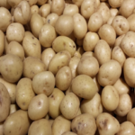 Certified seed potato varieties list