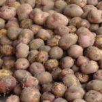 Sherekea potato y KALRO