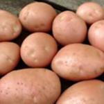 Kerr's Pink potato variety