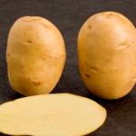 Caruso potato variety by Den Hartigh BV
