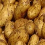Shangi potato variety by KALRO