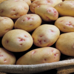 seed potato varieties Carolus by Agrico East Africa