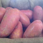 Laura potato variety by Bioplant GmbH